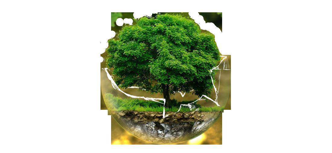 Imagen de un arbol dentro de una bola de cristal rota que simboliza el medio ambiente